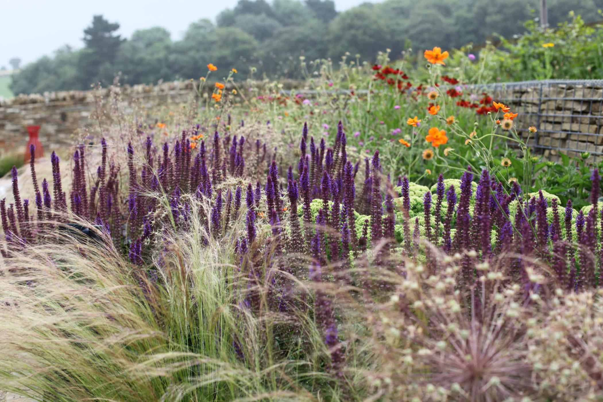 Barn Conversion-bestall and co -Beautiful Planting-Planting Design