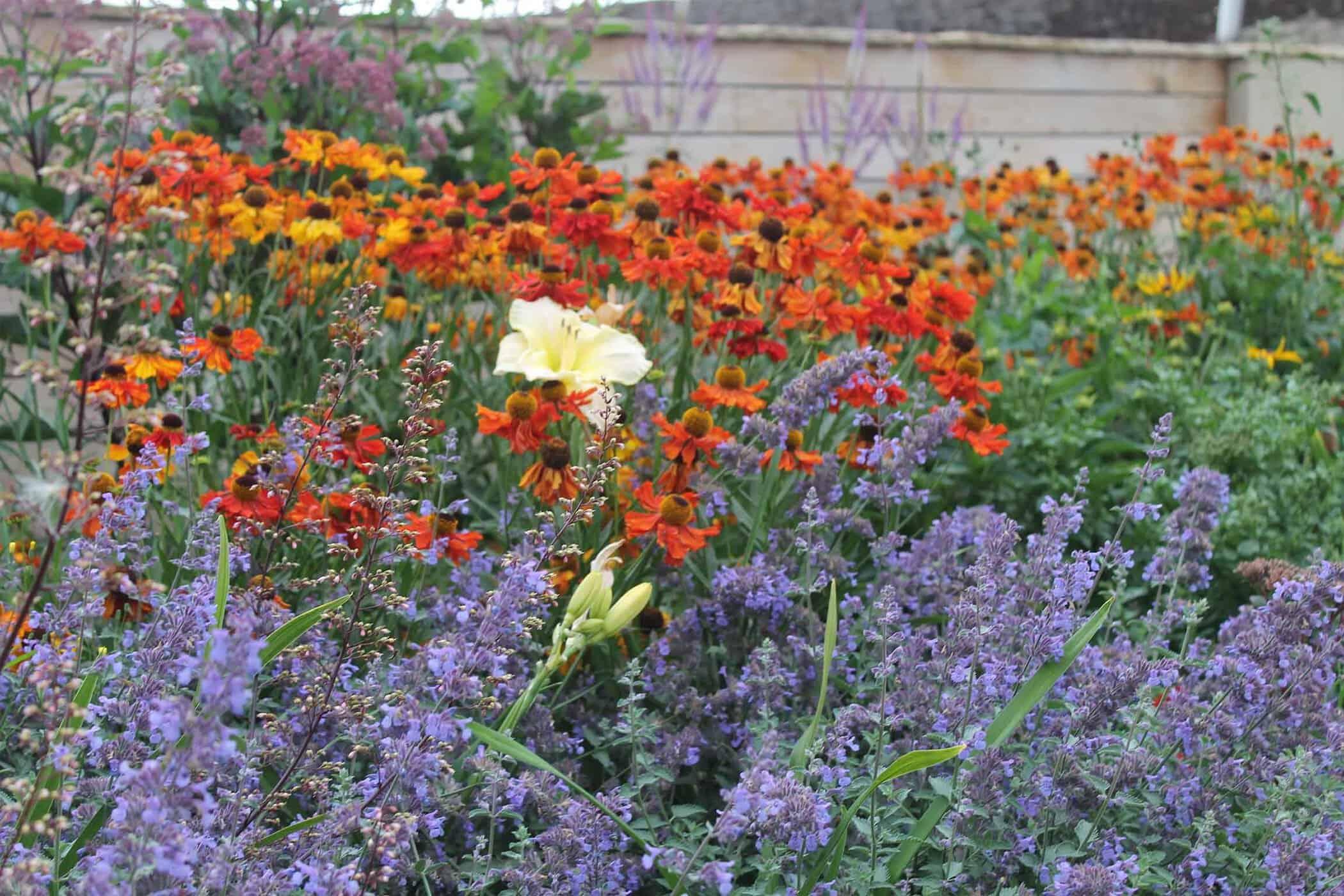 Terrace Delight-Bestall-and-co-yorkshire-modern-planting-dutch-planting Modern terraced garden