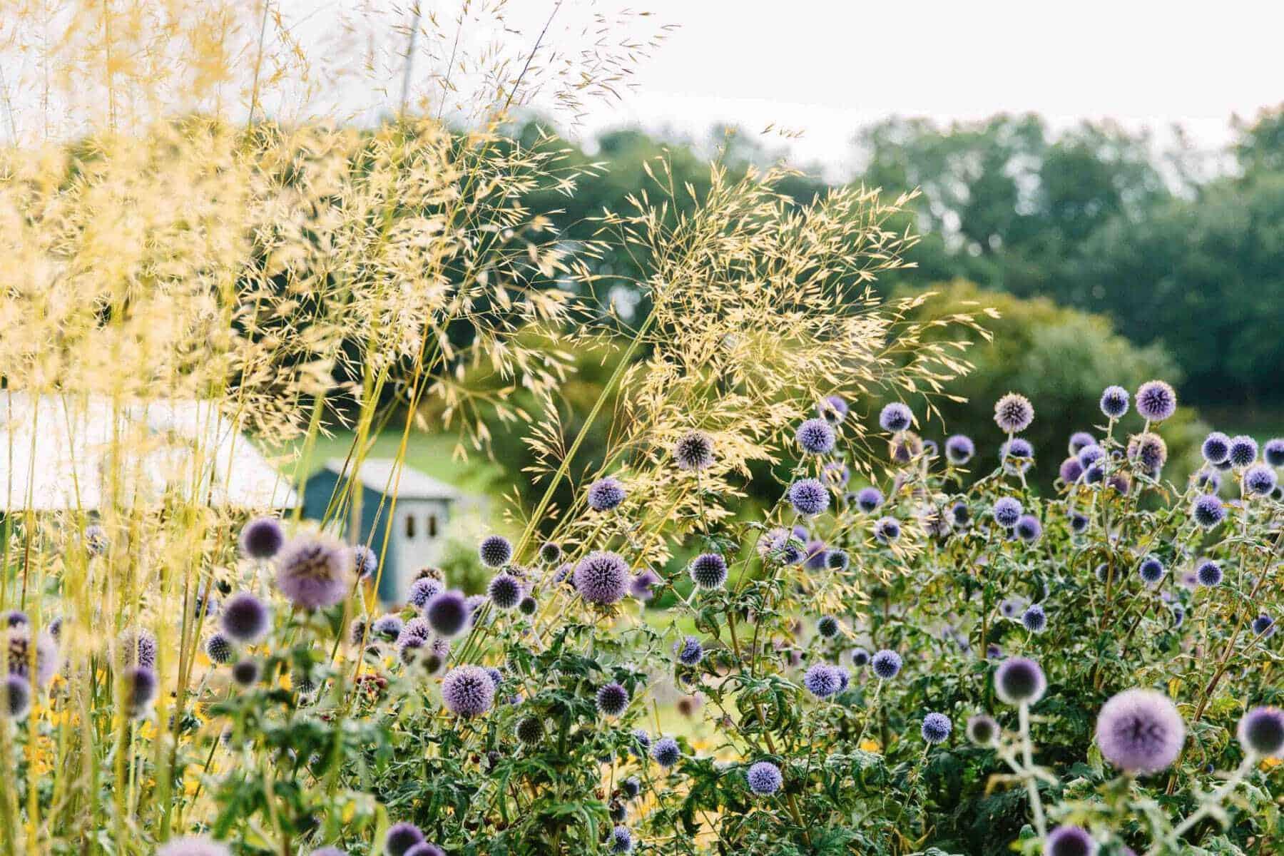 Country-Garden-6