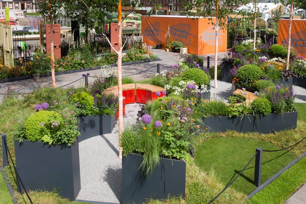 Beautiful curved planters at The Sir Simon Milton Foundation Garden, Chelsea Flower Show 2016 with painted orange betula trees and herbaceous planting, Box balls and allium bulbs