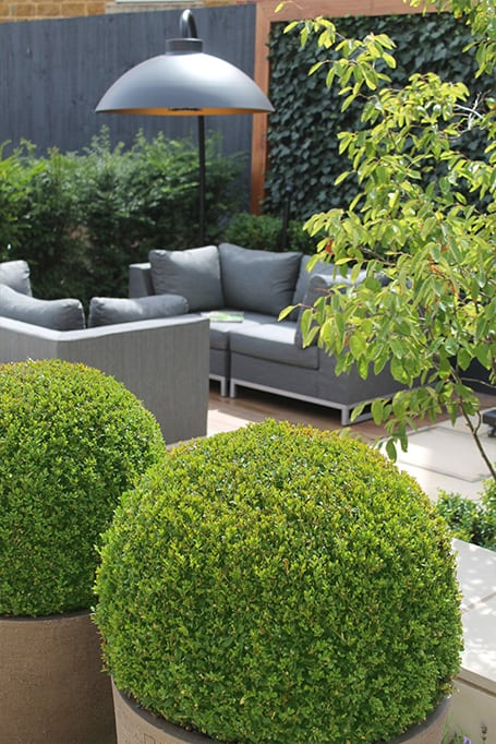 Outdoor rooms -bestall-and-co--modern-planting- Beautiful Planting -Planting Design- Box Balls-urban garden-Stepping stones-Chelsea Garden Designer Yorkshire- Chelsea Garden Designer Northern England- Lee Bestall-Paul Robinson-Society Of Garden Designers -Taxus Hedge- Buxus Hedge - Box ball in planter - Sawn York Paving-outdoor all weather sofa - bestall collection- iroko decking -lavender -ivy screens - Outdoor heat lamp - Multi-stem tree
