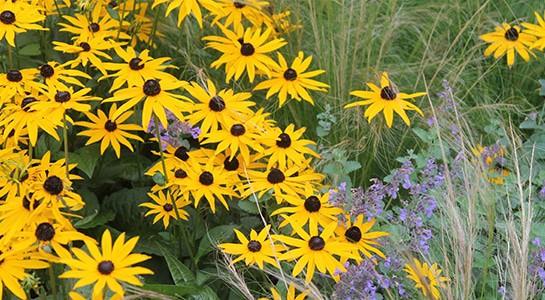 Garden-Planting-Scheme