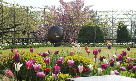 Garden-Designer Sheffield-Spring-Tulips