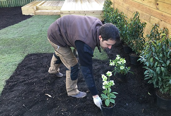 Planting-Maintenance-and-Aftercare