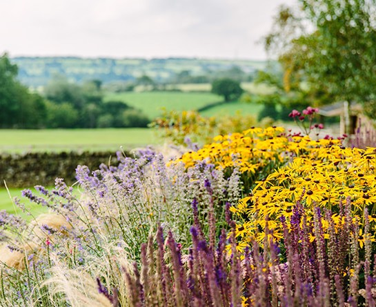 Planting services planting schemes refresh redesign for Redesign your garden