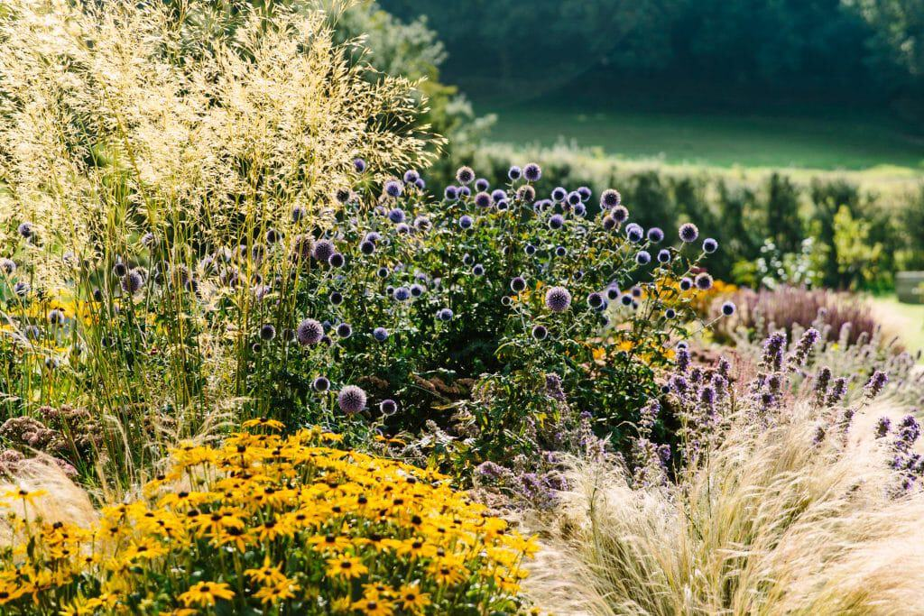 Garden, plant, travel and lifestyle photography