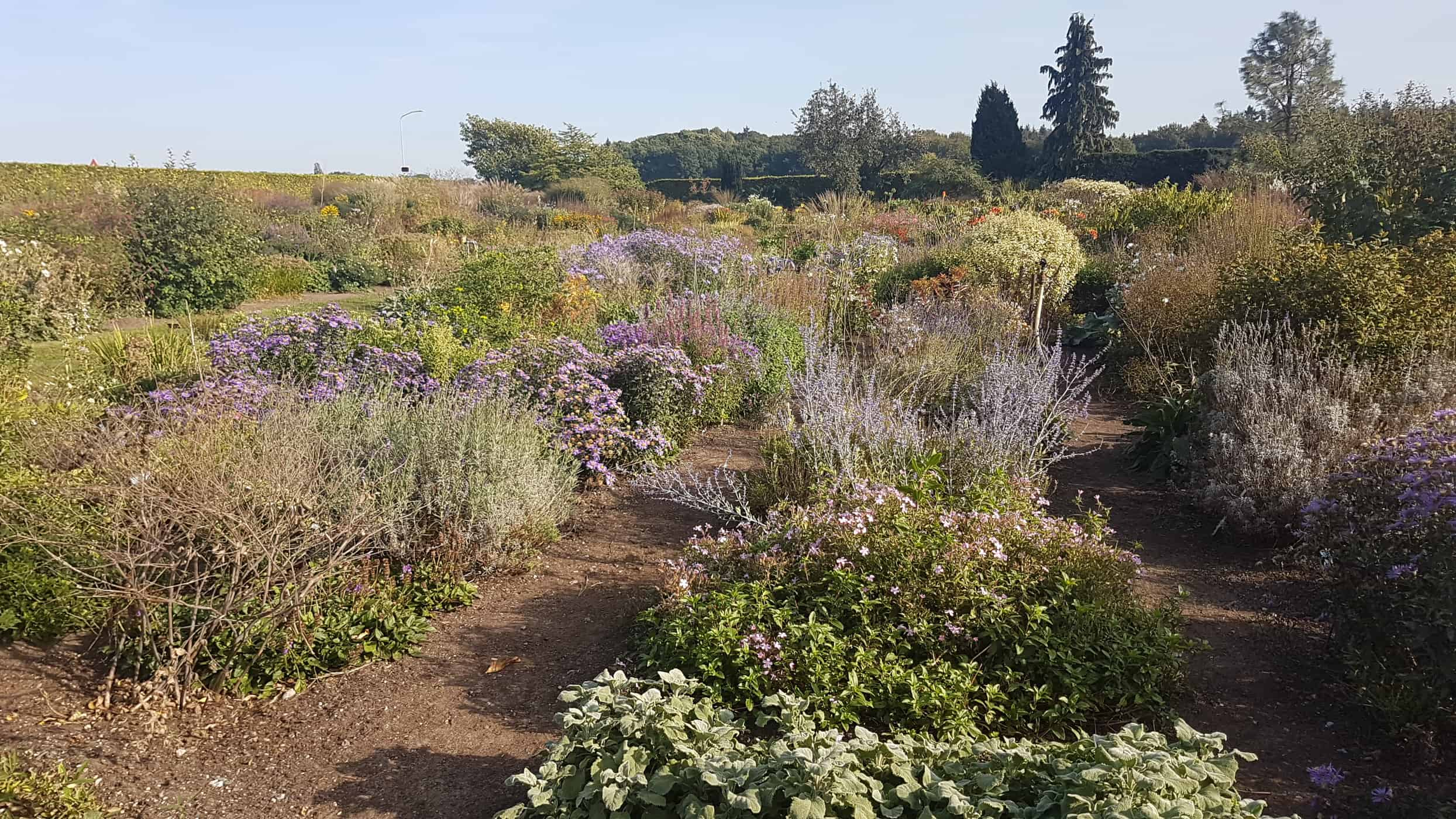 De Hessenhof - best nurseries for perennials and grasses