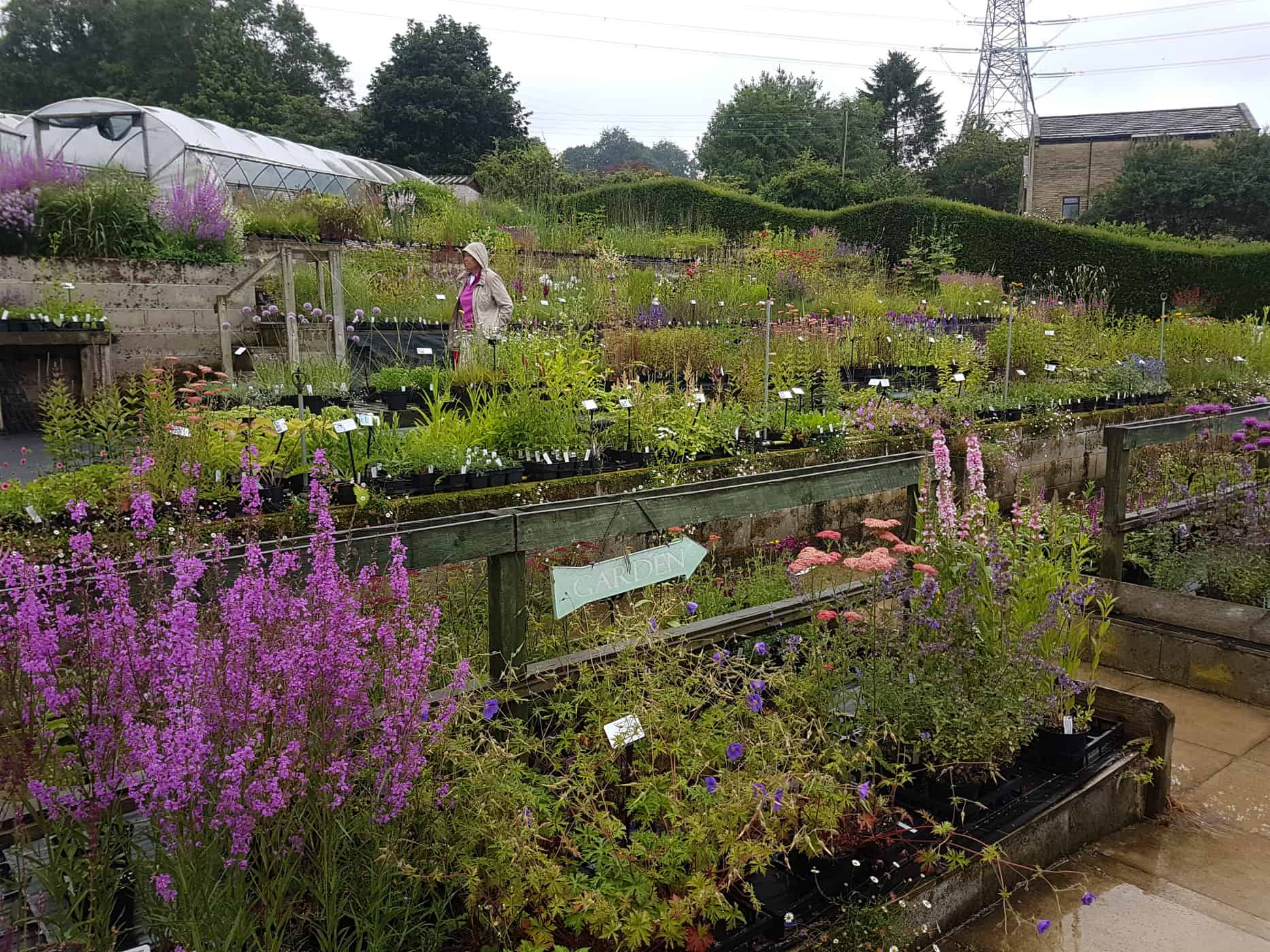 Dove Cottage Nursery - best nurseries for perennials and grasses