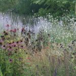 Best nurseries for perennials and grasses